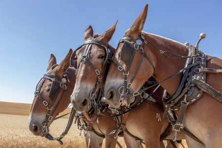 davenport: Horse nudges another Davenport, Washington.