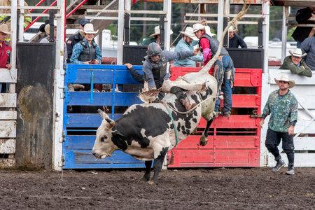 daring: Bull rider in Idaho at the North Idaho fair rodeo August 30, 2015.