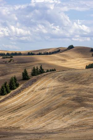 colfax: Rolling hills and trees near Colfax, Washington.