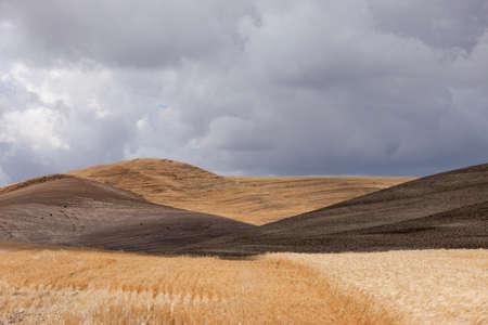colfax: Rolling hills near Colfax, Washington.
