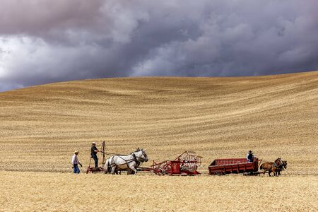 colfax: An old fashioned harvest using a horse powered swather at the Colfax Threshing Bee in Washington. Editorial