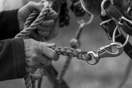 grasp: A BW close up of hands holding a braided lead rope.