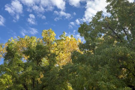 color in: Toque de color del otoño en el norte de Idaho.