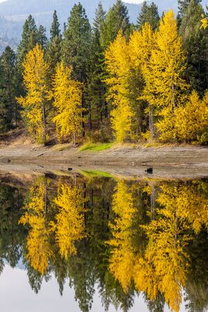 mirror image: MIrror image of fall colors near Blanchard, Idaho. Stock Photo