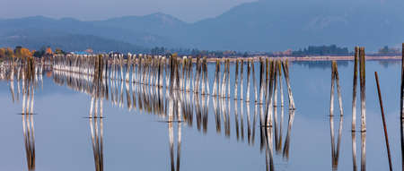 pilings: Panorama of pilings in river in Usk, Washington.