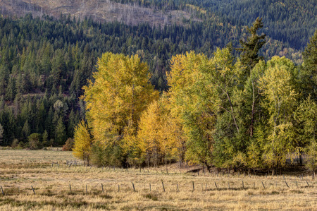 changing color: Changing color of leaves near Twin Lakes, Idaho. Stock Photo