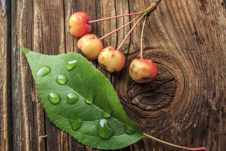 Crabapples and water drops on leaf.