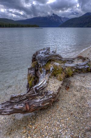 redfish: Driftwood by the Redfish lake. in Stanley, Idaho. Stock Photo
