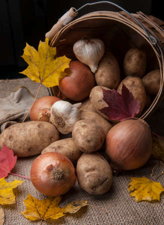 close up of onions in a basket: A close up of potatoes, garlic, and onions laying out of an overturned basket. Stock Photo