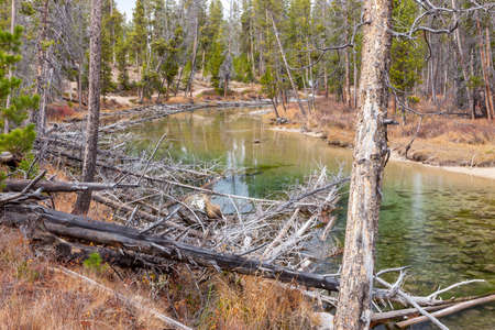 redfish: Logs lays in the foreground of Redfish Creek near Stabley, Idaho. Stock Photo