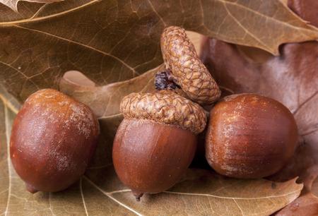 acorns: Three acorns on leaves.
