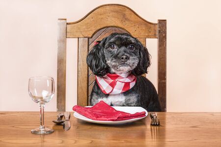 waits: Dog waits for his food,