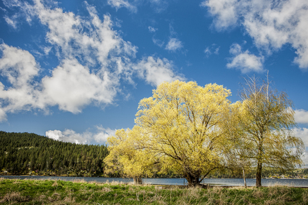 washington landscape: Trees in the landscape at Liberty Lake in Washington.