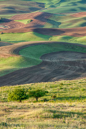 palouse: Rolling hills in the palouse region of eastern Washington.