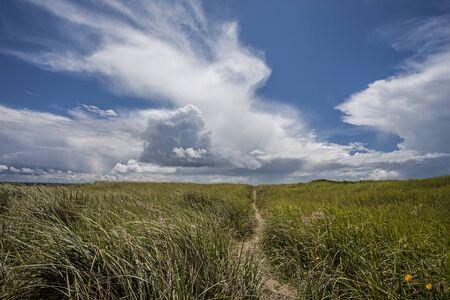 shores: Tall grass under a blue sky at the south end of Ocean Shores, Washington.
