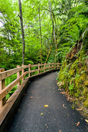 madison: The path leading to Madison Falls, in the Olympic Peninsula of Washington.