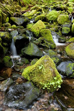 sol duc river: Lush moss covered rocks and a stream near Sol Duc Falls in Washington.