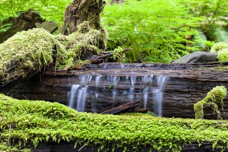 sol duc river: Water flows over a log in the stream along the Sold Duc falls trail in Washington.