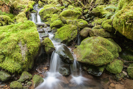 sol duc: Cascades through moss covered rocks along the Sol Duc Falls trail in Washington. Stock Photo