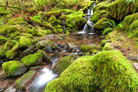 sol duc: Cascades and small pools in a stream along the Sol Duc Falls trail in Washington.