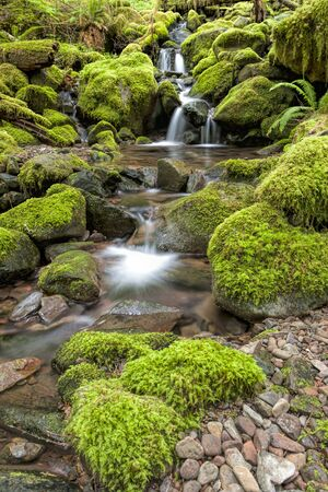 sol duc river: Small cascades along a stream along the Sol Duc Falls trail in Washington.