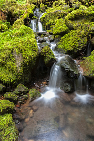 sol duc river: Small falls through moss covered rocks along the Sol Duc Falls trail in Washington.
