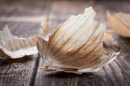 backlit: Backlit onion peel.