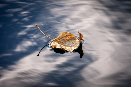 Leaf floats calmly on water.