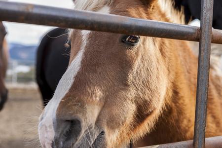 Pony looks through bars.