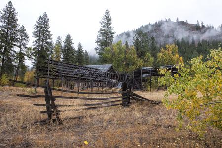 run down: Run down barn and bush in Okanogan county in Washington near Winthrop.