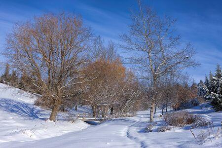 Barren trees in snowy park in Moscow, Idaho. 版權商用圖片
