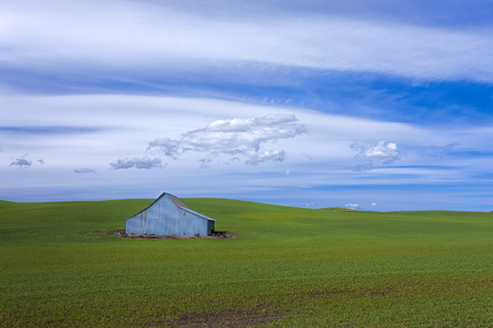 A metal barn stands in a green field on the Palouse of eastern Washington.