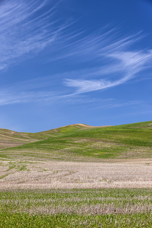 Green hills under a blue sky in the palouse region of eastern Washington. Stock Photo