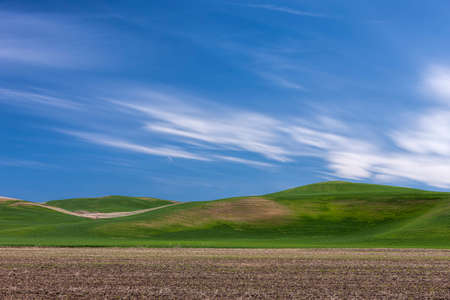 Rolling hills on the Palouse in eastern Washington.