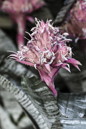 Pretty silver vase flower.