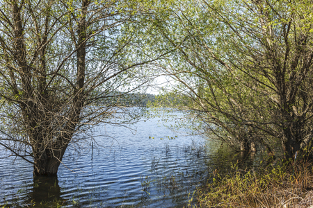 Trees are partly submerged in rising water brought on every year by spring thaws on Hauser Lake, Idaho.