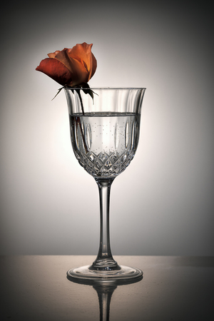Orange rose placed in a crystal glass of water in a studio setting..