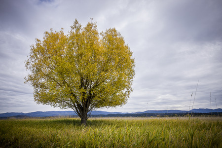 A single tree in the field under a cloudy sky in Autumn at the Kootenai Wildlife Refuge near Bonners Ferry, Idaho.