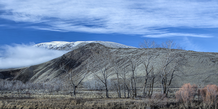 Barren trees in winter are in the foreground of mountains in the background north of Yakima, Washington.