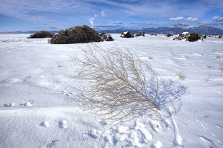 A barren plant lays in the snow on the Rathdrum prairie in north Idaho.