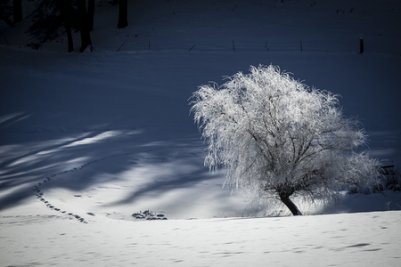 A frost covered tree in a snowy field near Coeur d'Alene, Idaho. 版權商用圖片