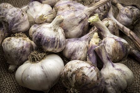 A close up of a bunch of garlic bulbs are displayed on old burlap. Imagens