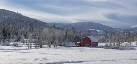 A panoramic photo of barren trees surrounding this red barn standing in a snowy field in north Idaho. 版權商用圖片