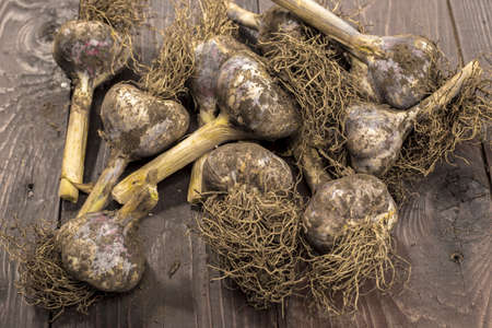 An overview of freshly picked garlic from a garden that still has dirt on them. Stok Fotoğraf