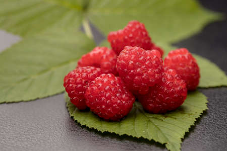 A close up studio photo of freshly picked raspberries on a raspberry leaf for display.