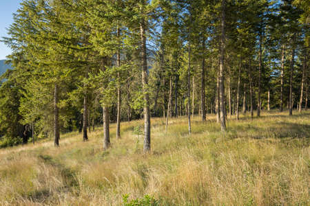 A landscape of trees and field grass at Farragut State Park in north Idaho. Stok Fotoğraf