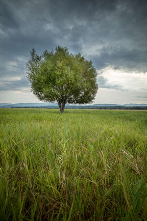 A beautiful tree in a grassy field at the Kootenai Wildlife Refuge near Bonners Ferry, Idaho. Stok Fotoğraf