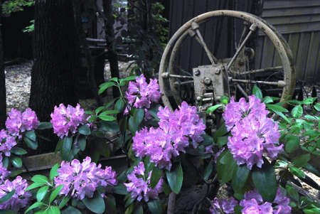FLOWERS AND OLD MACHINE