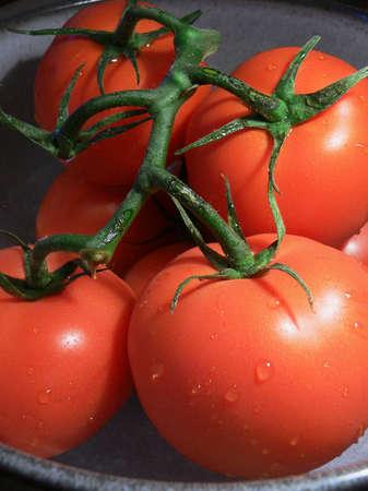 washed: Freshly Washed Red Tomatoes on Vine Stock Photo