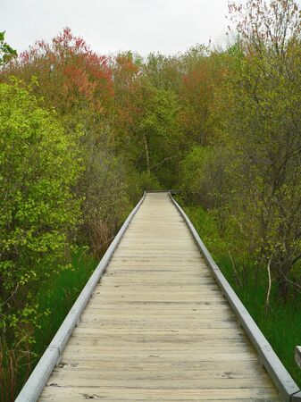 lonliness: Empty Wooden path leading into wooden area Stock Photo